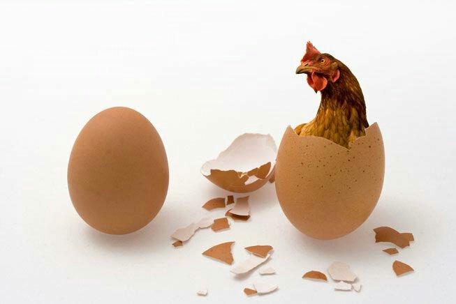 egg-chicken-in-egg-chicken-or-egg606584617